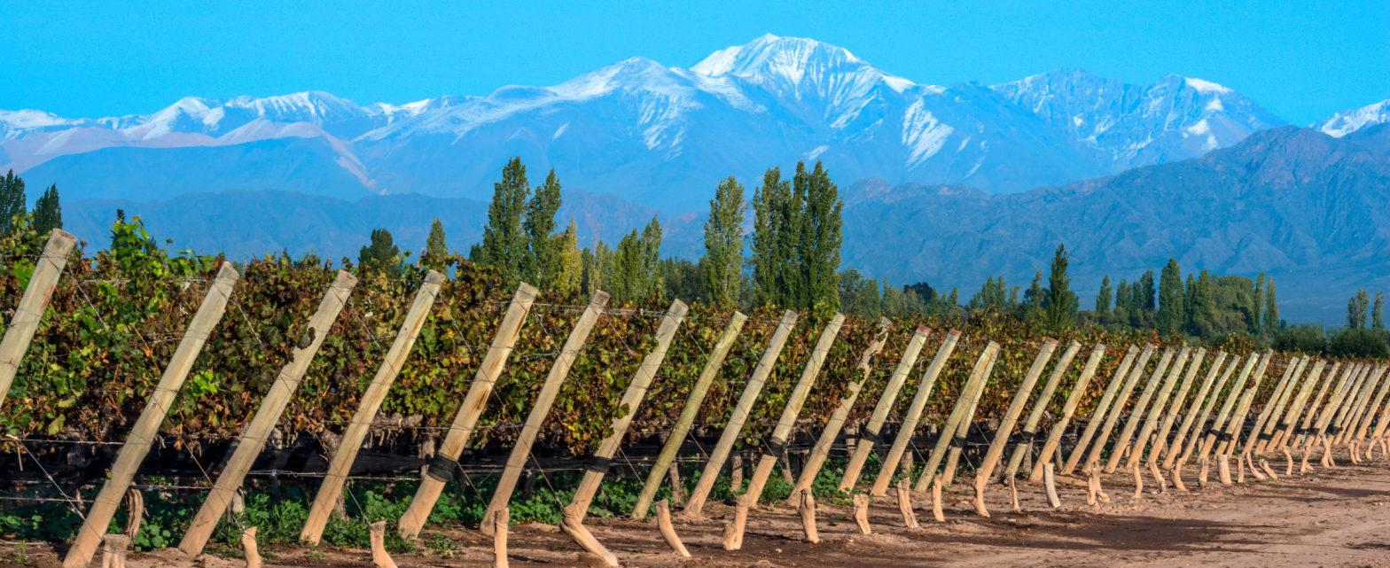 visit the Vineyards of Mendoza, Argentina