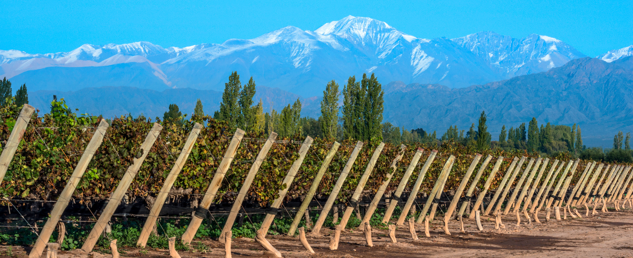 visit the Vineyards of Mendoza, Argentina
