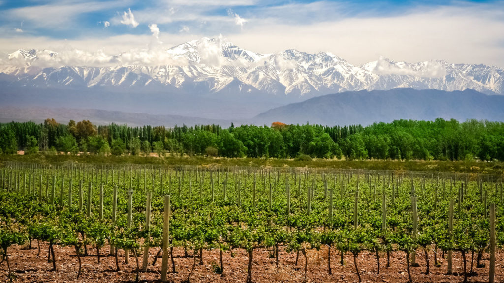 wine and olive vineyards of Mendoza