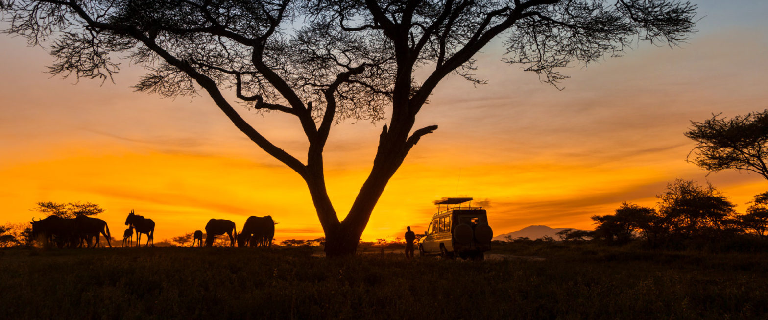 Serengeti National Park tour in tanzania